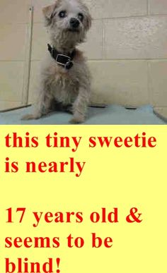 16 YEAR OLD NEEDS PLEDGES AND RESCUE! A3227435 My name is Pistacho and I'm an approximately 16 years, 8 month old male terrier. I am already neutered. I have been at the Downey Animal Care Center since April 1, 2015. I will be available on April 5, 2015. You can visit me at my temporary home at D714. https://www.facebook.com/photo.php?fbid=846103452136655&set=pb.100002110236304.-2207520000.1428172027.&type=3&theater