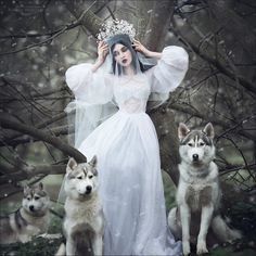 with white wolves