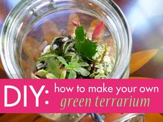 Read on for our easy terrarium DIY to learn how to make your own to keep or give away for the holidays.