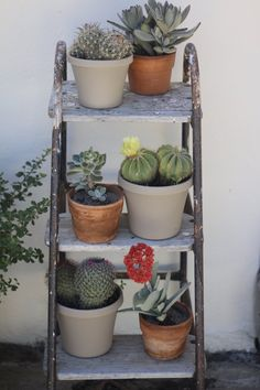How adorable is this display of succulents on an old step ladder! Nothing more surprising as a flowering succulent.