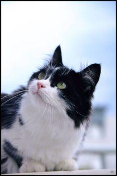 Cat - Alley cat - Jazz on www.yummypets.com
