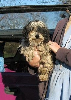 National Mill Dog Rescue: Scenes from a Tennessee Puppy Mill