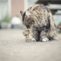 Danbo with cat