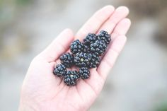 Blackberries, Sweden #foraging #sweden #swedishsummer
