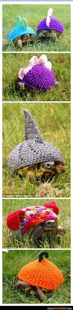 Última moda para tortugas. Quiero uno de esos para mis bebes!!!!