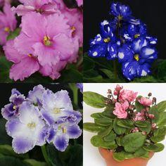 Blau blühende Pflanzen und Blumen bestimmen   Illustration botanique ...