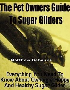 Sugar glider as Pet