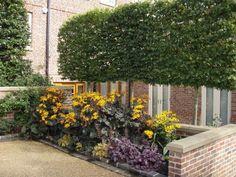 Les 238 meilleures images du tableau Jardin: autour de l\'arbre sur ...