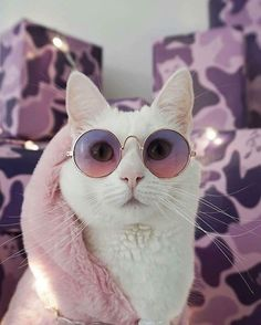 I love the colors that match the glasses and scarf of this lovely white cat. I love the colors that match the glasses and scarf of this lovely white cat. Funny Cats, Funny Animals, Cute Animals, Animals Images, Wild Animals, Pretty Cats, Beautiful Cats, Cute Kittens, Cats And Kittens
