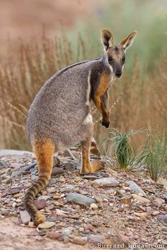 Will Burrard-Lucas is a professional wildlife photographer known for using technology and innovation to photograph wildlife in new ways. Zoo Animals, Animals And Pets, Funny Animals, Cute Animals, Beautiful Dogs, Animals Beautiful, Wild Animals Photography, Wildlife Photography, Australia Animals