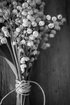 Black and White Black And White Flowers, Black N White, Black And White Pictures, Black And White Aesthetic, Jolie Photo, Lily Of The Valley, Black And White Photography, Color Splash, Aesthetic Wallpapers