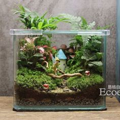 Amazing DIY Mini Fairy Garden for Miniature Landscaping 83 - Rockindeco Fairy Terrarium, Terrarium Plants, Succulent Terrarium, Succulents Garden, Mini Fairy Garden, Gnome Garden, Fairy Garden Houses, Decoration Plante, Paludarium