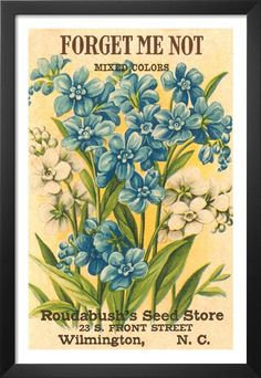 Forget Me Not Seed Packet Premium Poster