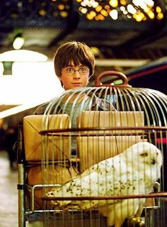 Harry and Hedwig :) this is one of my favorite stills of the whole series - they have such an amazing journey ahead of them
