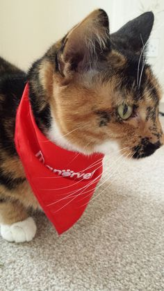 If you have any Manor Bandana photos that you'd like to share with us, please post them on our Facebook page - we would so love to see them!