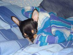 Durmiendo como un angelito perruno!