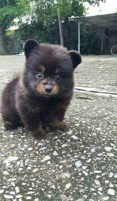 Pup that looks like a cub