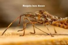 Rising temperatures must prevent: Vector-borne diseases Malaria Symptoms, Japanese Encephalitis, Dengue Fever, High Fever, Muscle Pain, Homeopathy, Medical Advice, Human Body, Muscle Soreness