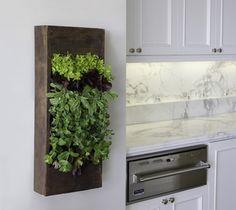 Kitchen Herbs - contemporary - kitchen - los angeles - Bright Green
