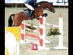 ▶ www.sporthorses-online.com 2007 Holsteiner stallion for sale - YouTube