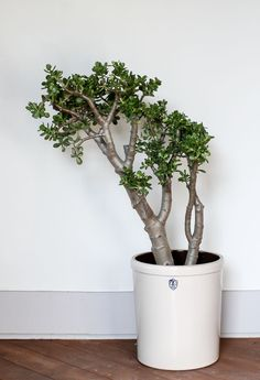 Create An Indoor Jungle With These Large Plants