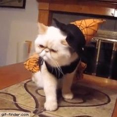 Cat in Witch Costume Falls off Table | Gif Finder – Find and Share funny animated gifs