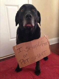 Hmmm should we warn petsmart theres a serial slobber uh robber on the loose