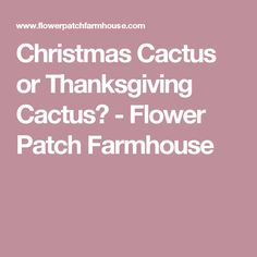 Christmas Cactus or Thanksgiving Cactus? - Flower Patch Farmhouse