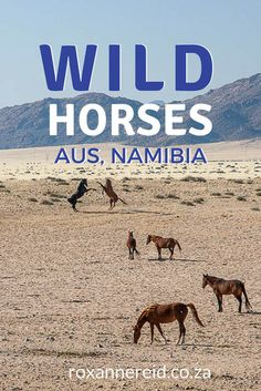 Visit the wild horses of Aus in Namibia #travel #Africa #horses