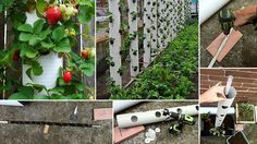 Sometimes the only thing that stands between a great garden and no garden at all is a vertical planter. Upright planters let those short on space still. Jardin Vertical Diy, Vertical Planter, Vertical Garden Diy, Vertical Gardens, Strawberry Tower, Strawberry Planters, Strawberry Garden, Strawberry Patch, Strawberry Fields