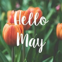 Hello May and Happy Wednesday! Seasons Months, Days And Months, Months In A Year, New Month Quotes, Monthly Quotes, New Month Wishes, Welcome May, Spring Months, Fall Nail Art Designs