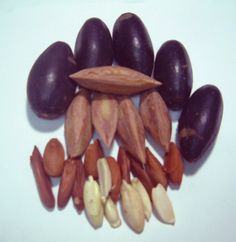 How to make blanched Pili Nuts to Pili Powder?