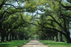 Boone Plantation, Charleston, South Carolina....beautiful and amazing history!