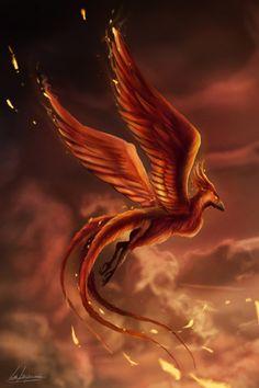 Phoenix by LukeFitzsimons Phoenix Artwork, Phoenix Wallpaper, Phoenix Images, Phoenix Bird Tattoos, Phoenix Tattoo Design, Magical Creatures, Fantasy Creatures, Fantasy Landscape, Fantasy Art