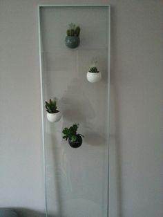 Plantdisplay glazen deur