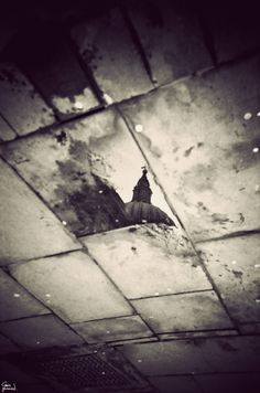 St Pauls reflected in the puddles left after the Occupy London camp was washed away… by Gavin Hammond
