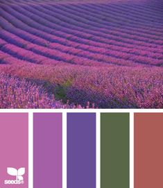 Lavender Fields - http://design-seeds.com/index.php/home/entry/lavender-fields1