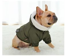 Material : FIBERType : DogsSeason : All seasonsPattern : SolidPlease Note:1. Please allow 1-3cm error due to manual measurement.2. Please understand that colors may exist chromatic aberration.Payment term:Only accept PaypalShipping1,Before placing your order, please confirm price and other details with us.2,The carrier of free shipping item is ePacket, it will takes about 40 days to you. if you need faster, please contact us know more shipping ways.3,We will just ship to your order… French Bulldog Clothes, Cute French Bulldog, French Bulldog Puppies, French Bulldogs, Pet Dogs, Dogs And Puppies, Pets, Doggies, Boy Dog Clothes