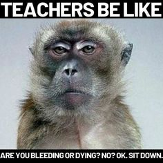 Teachers be like are you bleeding or dying no sit down