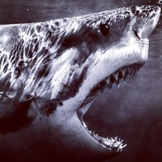 The best photos of sharks captured by Instagram users. #greatwhitesharks