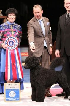 "Portuguese Water Dog ""Matisse"" Wins Best in Show At Thirteenth Annual AKC/Eukanuba ..."