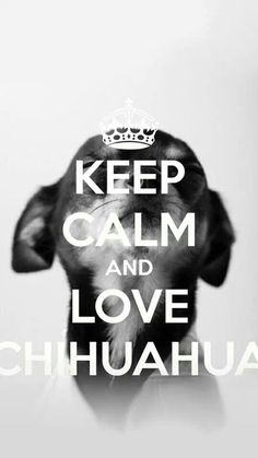 Love chihuahuas! Love Your Dog? Visit our website NOW! #chihuahuadaily…