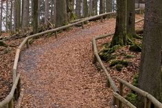 Path in the wood Bayerischer Wald (Germany) - December 2006