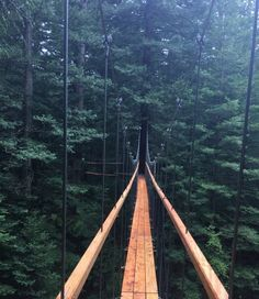 The Redwoods TreeWalk is located within the main Redwood Grove and starts outside the Redwoods I-Site and Visitor Centre. The … Continue reading →