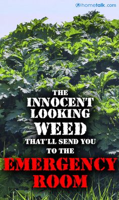 WARNING! Beware of this weed!