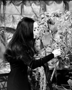 Carolyn Jones The Addams Family 1964, Addams Family Tv Show, Charles Addams, Victorian Goth, Gothic, Carolyn Jones, Morticia Addams, The Munsters, Classic Tv