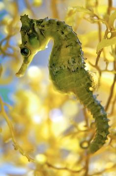 "I think sea horses are phenomenal. A friend of mine said to me ""but they always look so sad."""