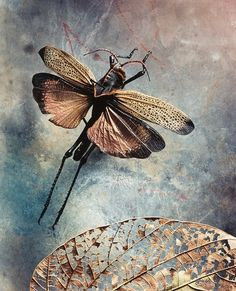 Jo Whaley: Fine Art Color Photographs of Insects,blending Natural History with Environmental concerns. Also Still life Photographs of Fruits, Vegetables, Flowers and Scientific objects,using a View Camera and Studio Lighting. Photography 2017, Nature Photography, Dramatic Lighting, T Art, Great Photographers, 2017 Photos, Detail Art, Art Fair, American Artists