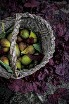 Schiacciata dolce con fichi e ricotta, by Vaniglia - storie di cucina