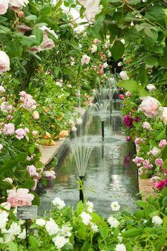 David Austin English Rose Garden